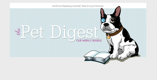 pet newsletter design