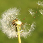 Stop Trying to Rank for Keywords! Use the Dandelion Theory Instead