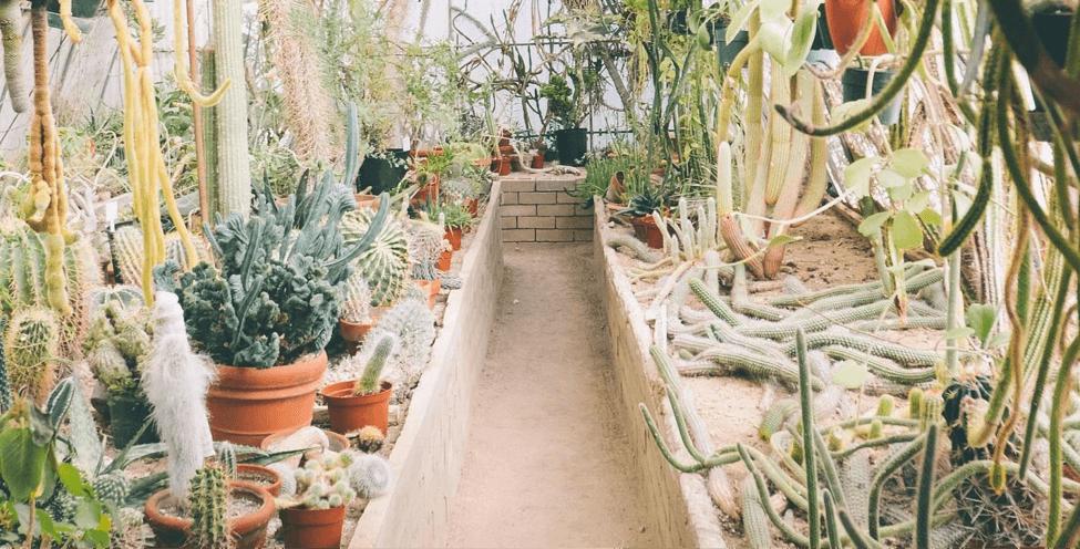 plant-three