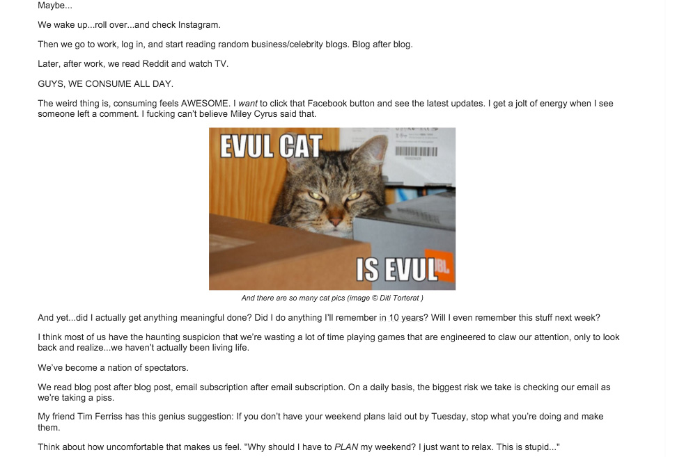 Evul Cat