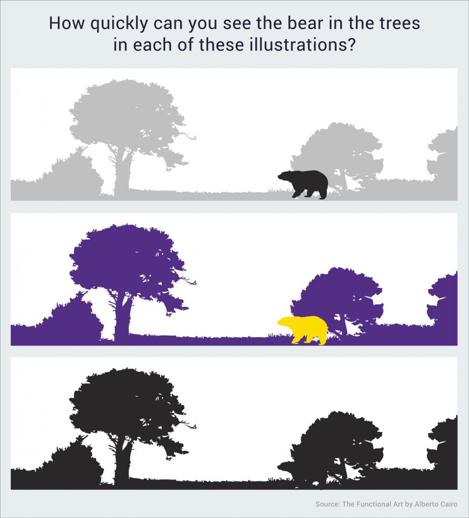 see the bear illustration